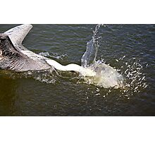 Pelican Diving for Minnows on the Run Photographic Print