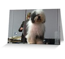 It's a shaggy dog story Greeting Card