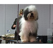 It's a shaggy dog story Photographic Print