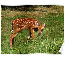 Innocence (White-tailed Deer Fawn) Poster