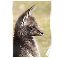 Forester wallaby portrait Poster