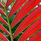 """Amaranth"" - A red palm abstract by RobDeCamp"