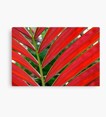"""""""Amaranth"""" - A red palm abstract Canvas Print"""