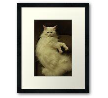 I'm too furry for you Framed Print