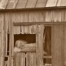 Hay bales in a barn by mltrue