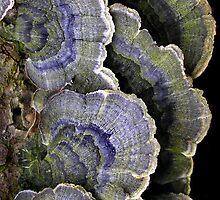 Winter Herbal Blues by Carla Wick/Jandelle Petters