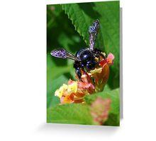 Bumblebee on Lantana Greeting Card