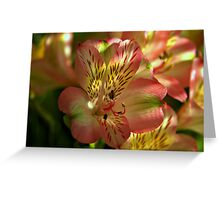Alstroemeria Blossom Greeting Card