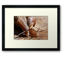 Best Friends - Garden Snail Cantareus aspersus Framed Print
