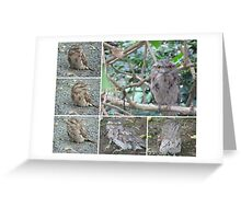 Tawny Frogmouth collage Greeting Card