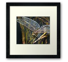 Dragonfly In The Light Framed Print