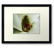 """'Magnolia & Bumble Bee"""" Framed Print"""