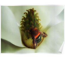 """'Magnolia & Bumble Bee"""" Poster"""