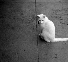 No Stranger to the Street by Tess Mishler