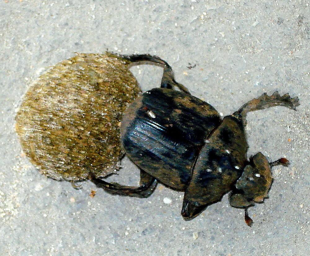 Dung Beetle by Irene  van Vuuren