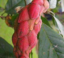 Custard apple bud by 3Cavaliers