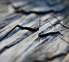 Waves Of Wood by Amy Dee