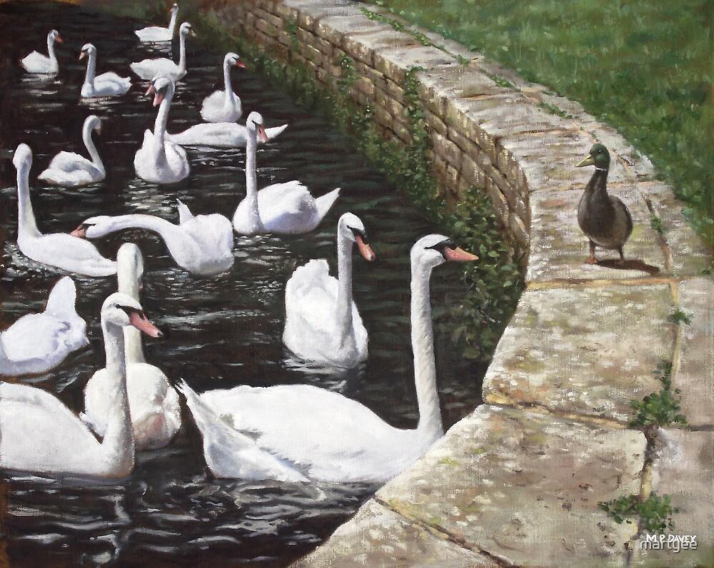 christchurch harbour swans with Mallard Duck conversation by martyee