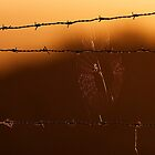 'Mainstay'. Backlit spider on barbed wire fence. by Chris Prior