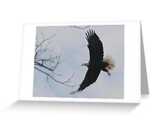 Back to the nest Greeting Card