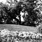 Big Tree at Greynold's Park by Glenn Cecero