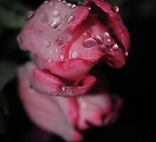 Pink With Water Drops by Jonice