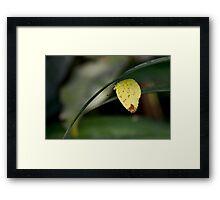 3-Spot Grass Yellow Framed Print
