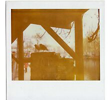Camden Starlings Photographic Print