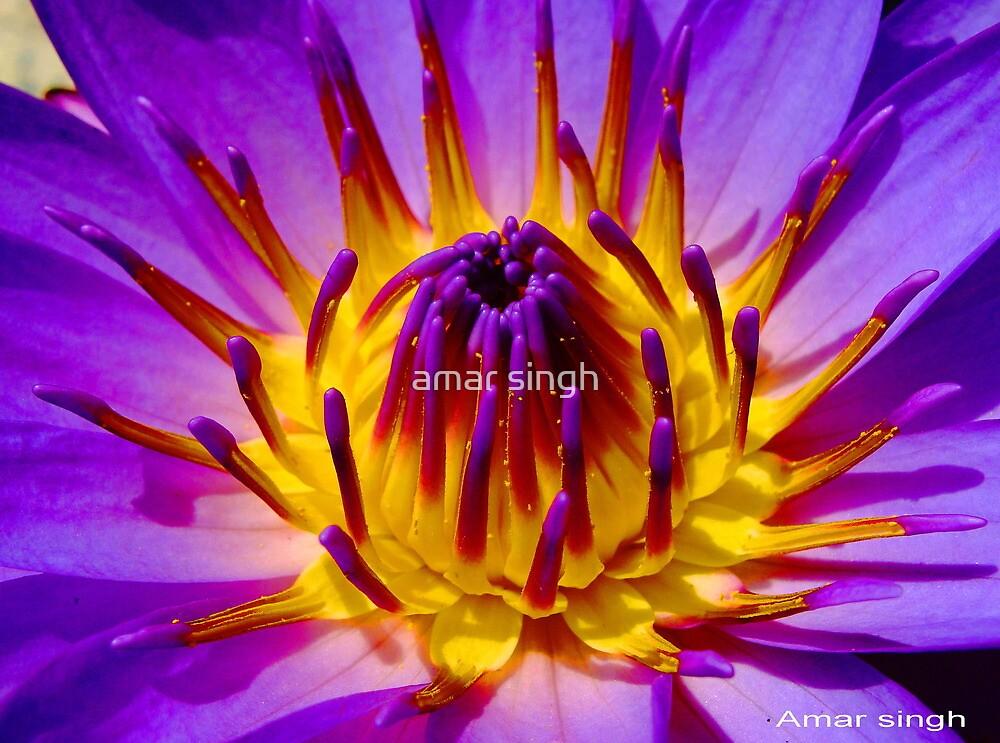 BURNING FLOWER by amar singh