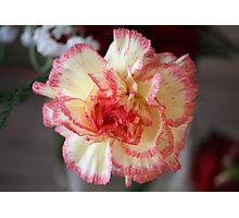 Pretty Carnation Photographic Print