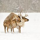 Caught Red Nosed ! by Daniel  Parent
