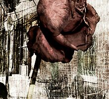 the rose of yesterday's sorrows by olga  hutsul