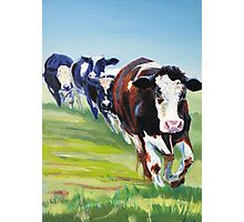 Morning Walk - Acrylic Painting of Four Cows walking Photographic Print