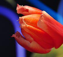 Tulips and blue swirls by mltrue