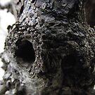 bark by pinkyosborne
