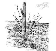 Saguaro National Park, Arizona by MarkArt