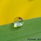 Water drop on leaf by amar singh