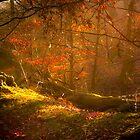 Magikal Forest by Loren Goldenberg-Kosbab
