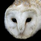 Barn Owl by Debbie Ashe