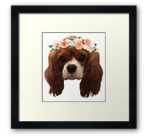 King Charles Cavalier with flower crown Framed Print