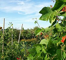 More pea patch by Mike Cressy
