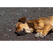 A dog's life Photographic Print