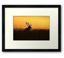 The Pride Of Nature            (Large Version) Framed Print