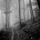 Trails by Toni Holopainen
