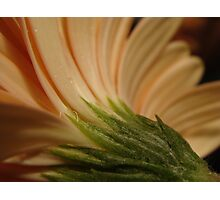 Curved flower Photographic Print