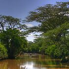 Serengeti Swamp by Paul Duckett