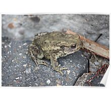 Garden - Common Toad Poster