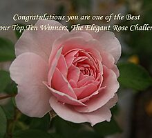 Elegant Rose Challenge by Peter Bodiam