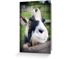 Nanny goat close-up at farm Greeting Card