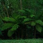 ferns by dudeman25